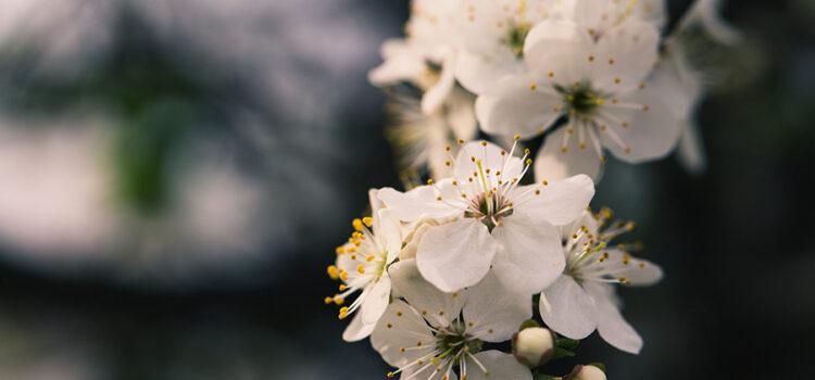 Servizio di vendita fiori online con consegna a domicilio